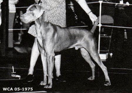 Longshot's Thunder Mug, - The Weimaraner Pedigree database